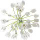 <span class='wpmi-mlabel'>Wild Garlic Event Catering Icon</span>